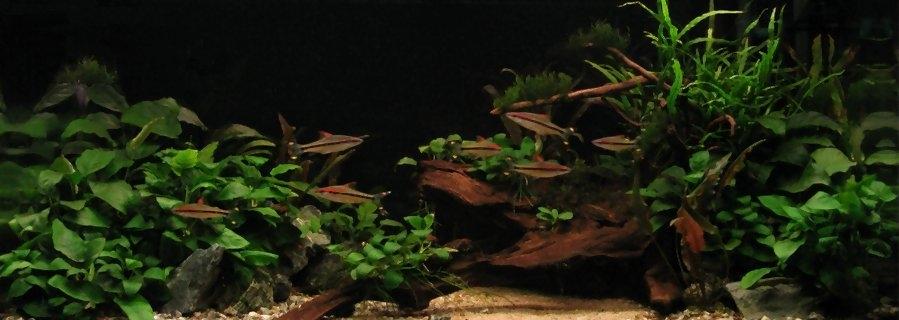 Een voorbeeld van een aquarium met makkelijke aquariumplanten.