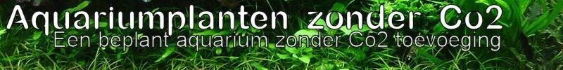 aquariumplanten zonder co2?, een beplant aquarium zonder co2 toevoeging